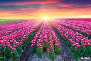 tranh 3d cánh đồng hoa