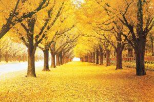 tranh 3d cảnh mùa thu