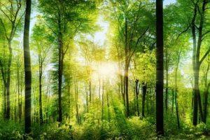 tranh rừng cây